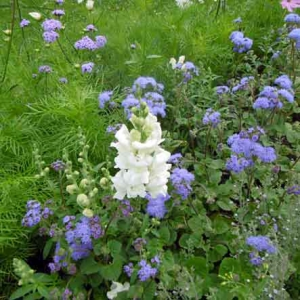blommor_sommarens1