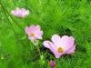 blommor_sommarens2
