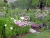blommor_sommarens6